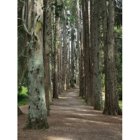Path Through Trees Leading To Okoroire Hot Springs Hotel Tirau North Island New Zealand Canvas Art   Panoramic Images  24 X 36
