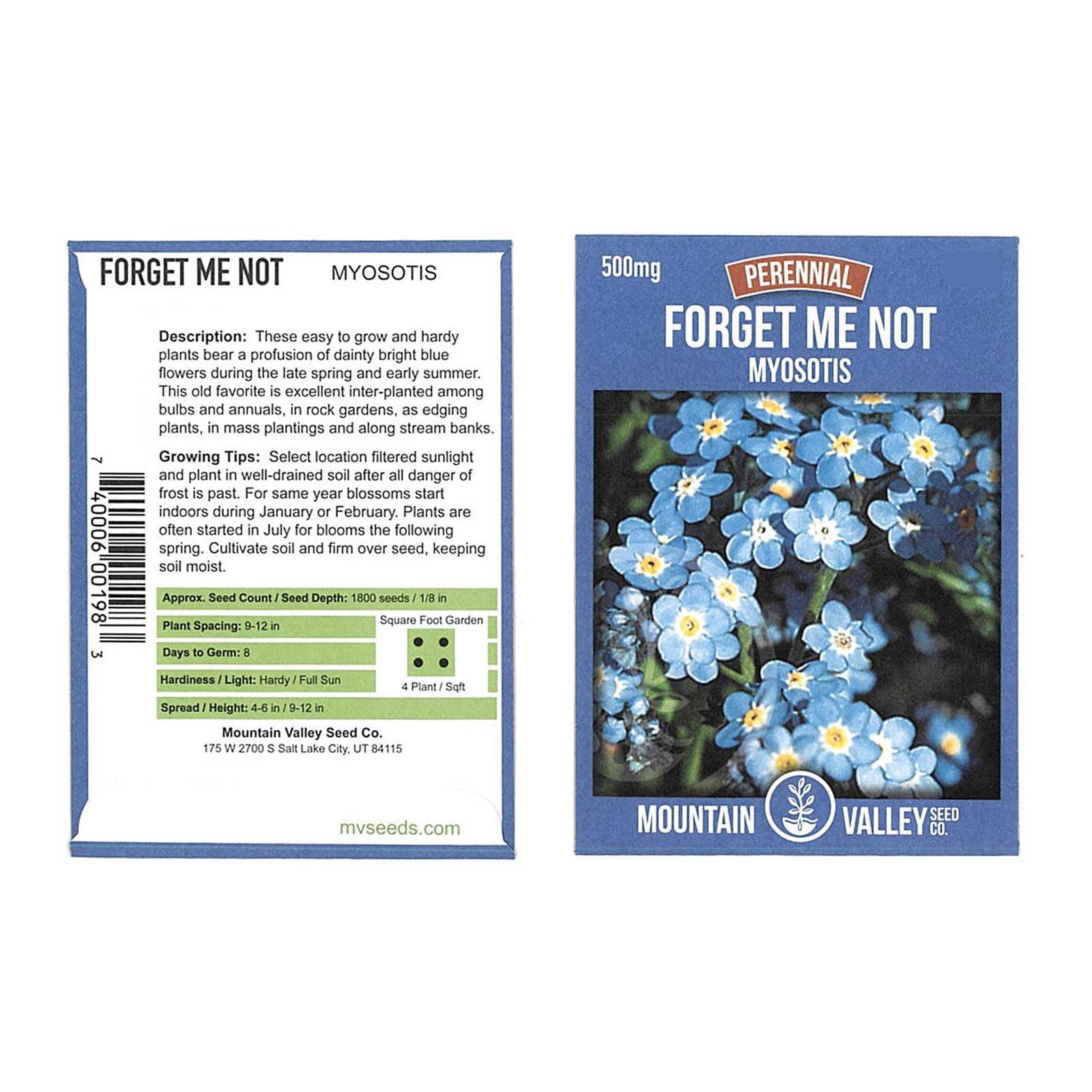 Myosotis Flower Garden Seeds - Sylvatica Forget Me Not - 500 Mg Packet - Perennial Flower Gardening Seeds - Myosotis sylvatica - Forget Me Not