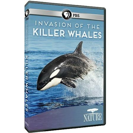 Nature: Invasion of the Killer Whales (DVD) - Killer Whale Halloween Panda