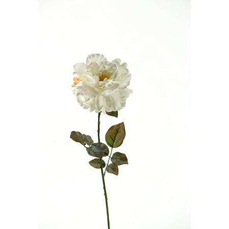 D&W Silks - Cream Ample Rose Stem - Set of 3 ()