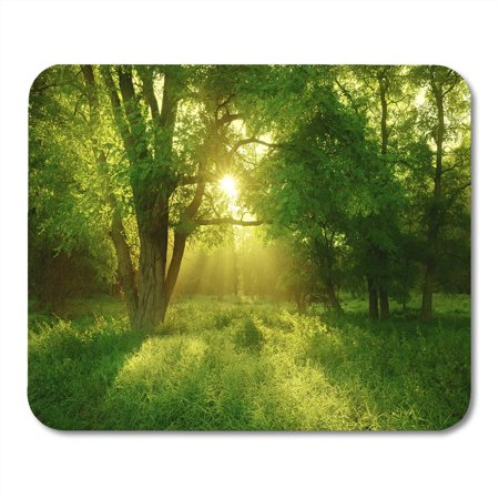 SIDONKU Green Sun Sunlit Foggy Forest Black Locust Tree on Clearing Meadow Grass Mousepad Mouse Pad Mouse Mat 9x10 inch