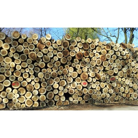 Canvas Print Wood Trunks Stack Stretched Canvas 10 x 14 ()