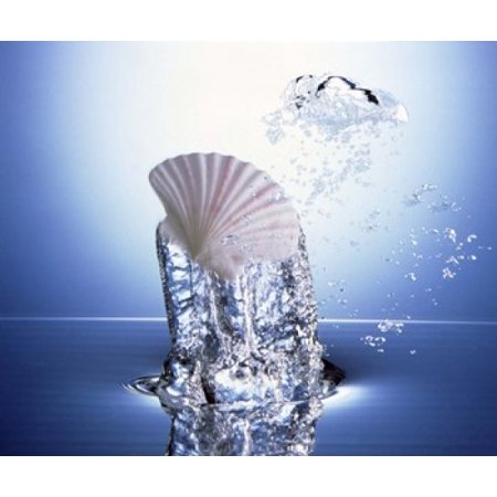 White scallop shell being raised on pillar of bubbling water Poster Print by Panoramic Images (24 x 20)