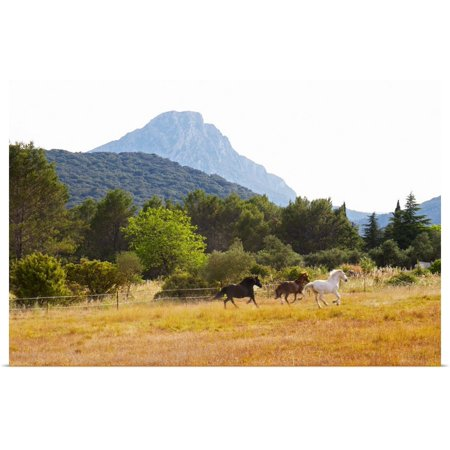 Pic Saint Loup (Great BIG Canvas   Rolled Per Karlsson Poster Print entitled The Pic St Loup Mountain Top Peak, Languedoc. Horses Running Free In A Field, France)