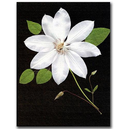 "Trademark Fine Art ""Star"" Canvas Art by Kathie McCurdy"