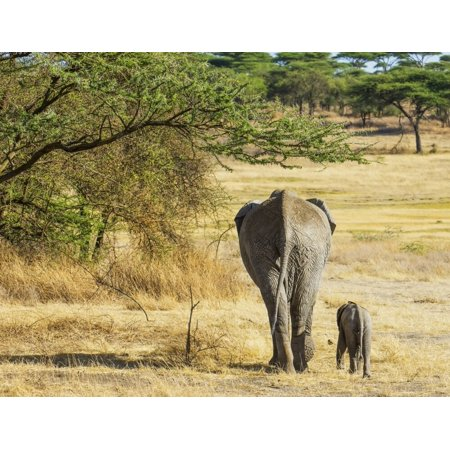 An African Elephant With It's Young; Tanzania Poster Print by Cathy Hart / Design Pics