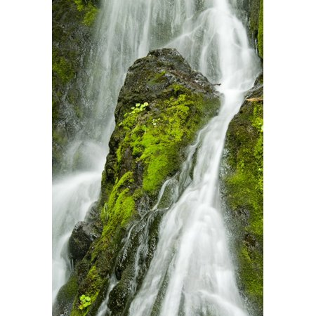 Light Cordova Decor (Waterfall Flows Over Green Foliage And Rock Outcrop Cordova Southcentral Alaska Summer Stretched Canvas - Cathy Hart  Design Pics (11 x)