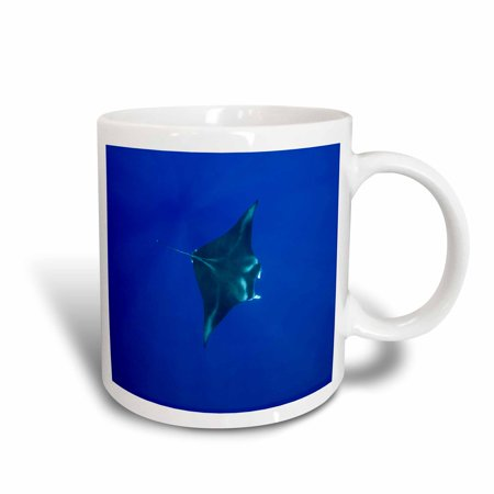 Rays Mug - 3dRose Hawaii, Big Island, Manta Ray marine life - US12 PSO0034 - Paul Souders, Ceramic Mug, 11-ounce