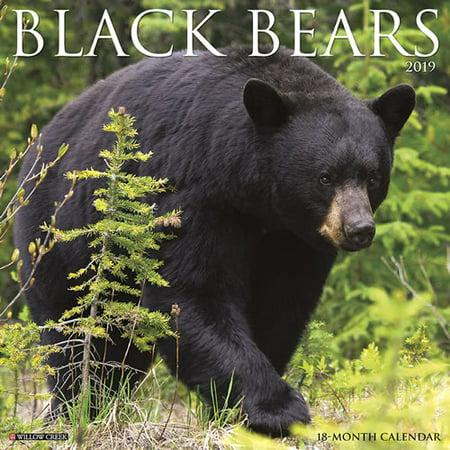 Willow Creek Press 2019 Black Bears Wall Calendar (Bear Calendar)
