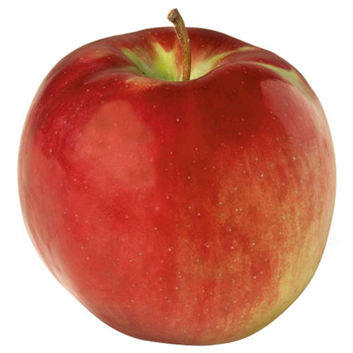 New York Apple Sales Cortland Apples, 5 lbs