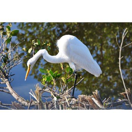 Ebbets Framed (Framed Art for Your Wall Nature Wild Wildlife Bird Egret Florida White 10x13 Frame )
