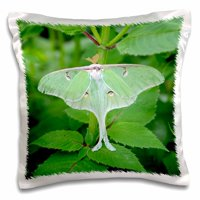 3dRose Luna Moth, Actias luna. Marion, Illinois, USA. - Pillow Case, 16 by 16-inch