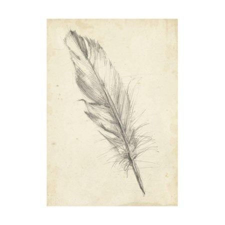 Feather Sketch III Print Wall Art By Ethan Harper (Art Com Feather Print)