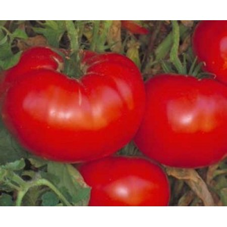 Tomato Delicious Seed Heirloom - 1 Packet