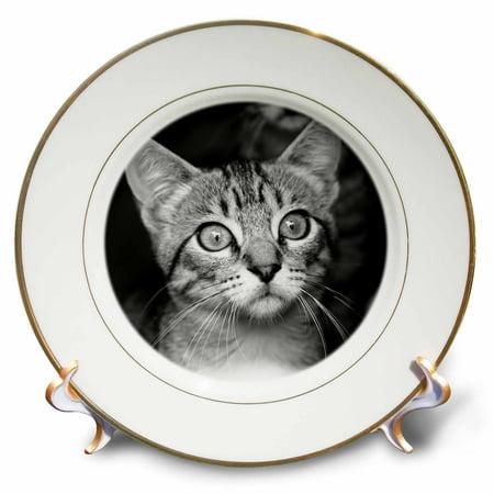 3dRose Cute Vintage Antique Cat Portrait Style - Porcelain Plate, -