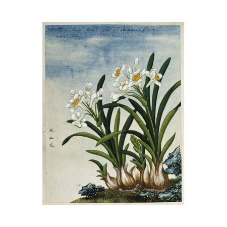 Early 19th-Century Chinese Watercolor of Daffodils Print Wall Art
