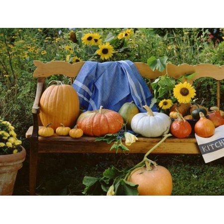Pumpkin Still Life on Wooden Bench in Country Garden Print Wall Art