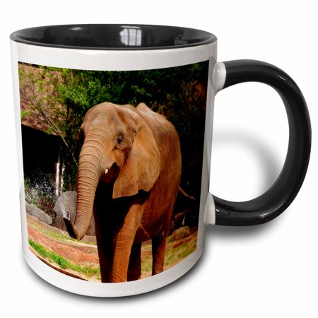 11 Ounce Spray Silicone - 3dRose Elephant Spray, African Elephant spraying water from trunk - Two Tone Black Mug, 11-ounce