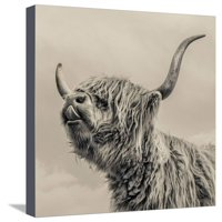 Highland Cattle Farmhouse Cow Photo Stretched Canvas Print Wall Art By Mark Gemmell