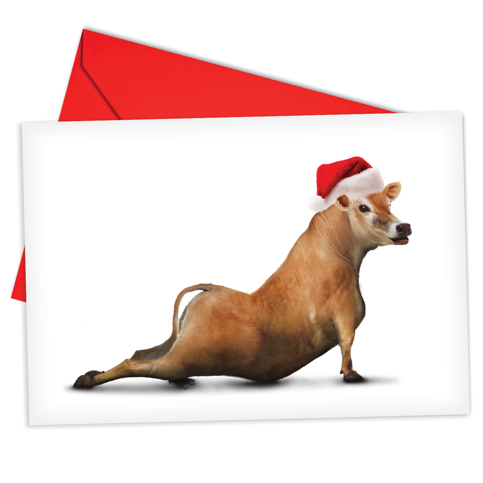 'B6545EXSG Holiday Bovine Nirvana Christmas Cards' Box Set of 12 Humorous Merry Christmas Greeting Cards with Envelopes by NobleWorks