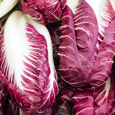 Grow Lights Seeds (Radicchio Garden Seeds - Rouge de Verona Variety - 1 oz - Heirloom Vegetable Gardening Seed - Grow Non-GMO Vegetables and Salad Greens )