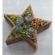 1800Flowers Succulents in Star Shape Reclaimed Wood Planter