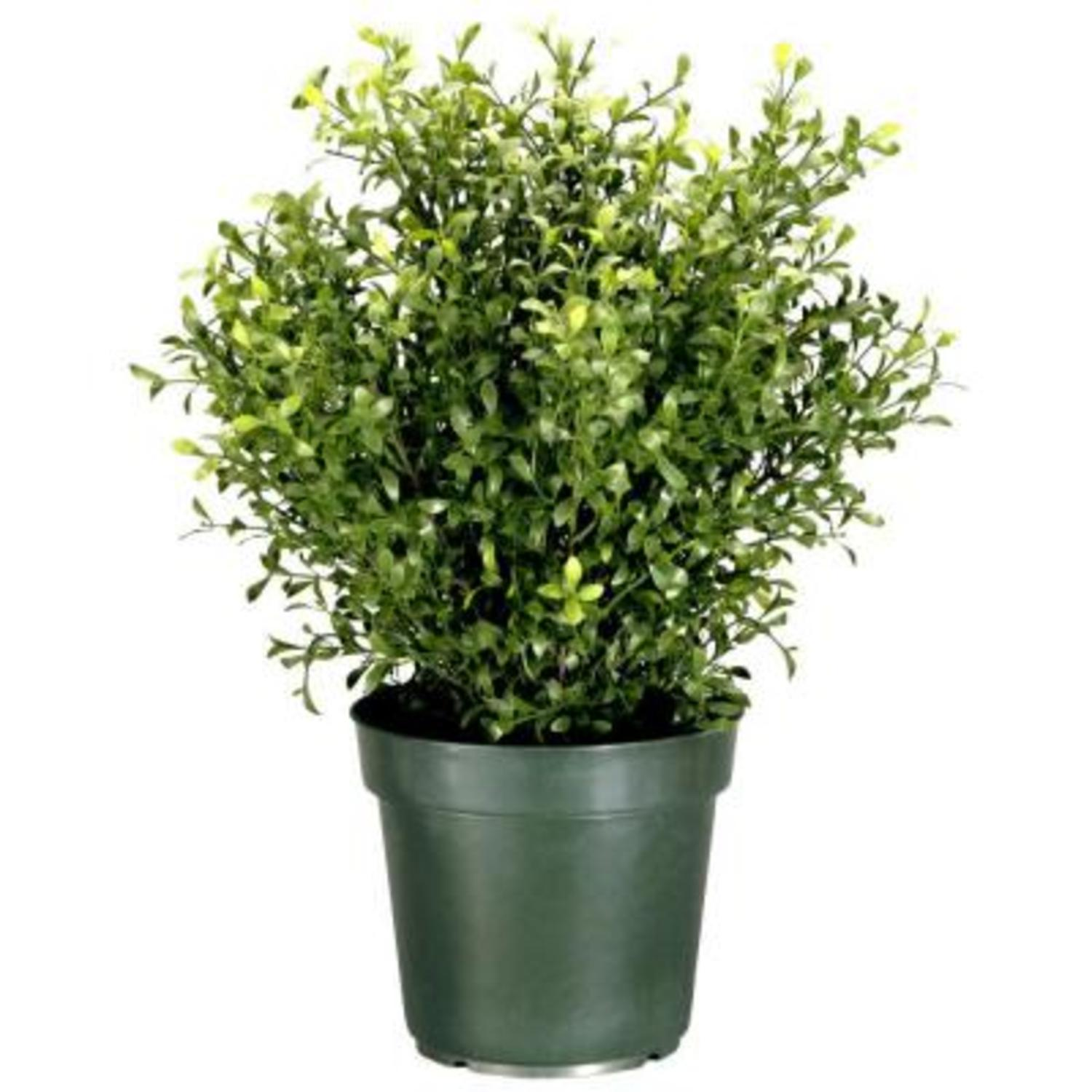 "30"" Potted Artificial Realistic Argentea Jade Plant"
