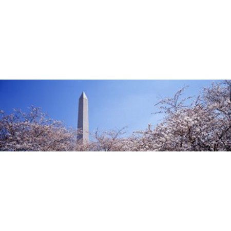 Washington Monument behind cherry blossom trees Washington DC USA Canvas Art - Panoramic Images (36 x (Best Way To See Washington Dc Monuments)