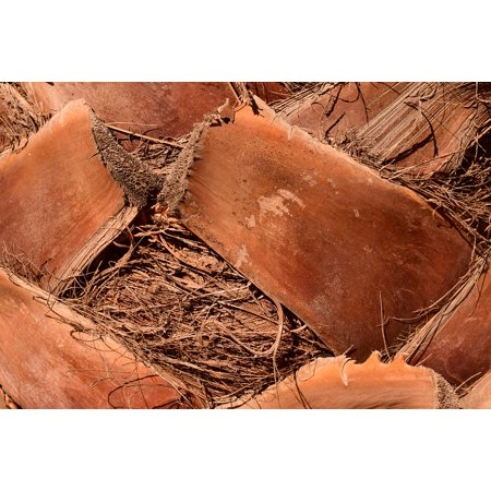 LAMINATED POSTER Background Close Dry Palm Log Brown Palm Trunk Poster Print 24 x 36 ()