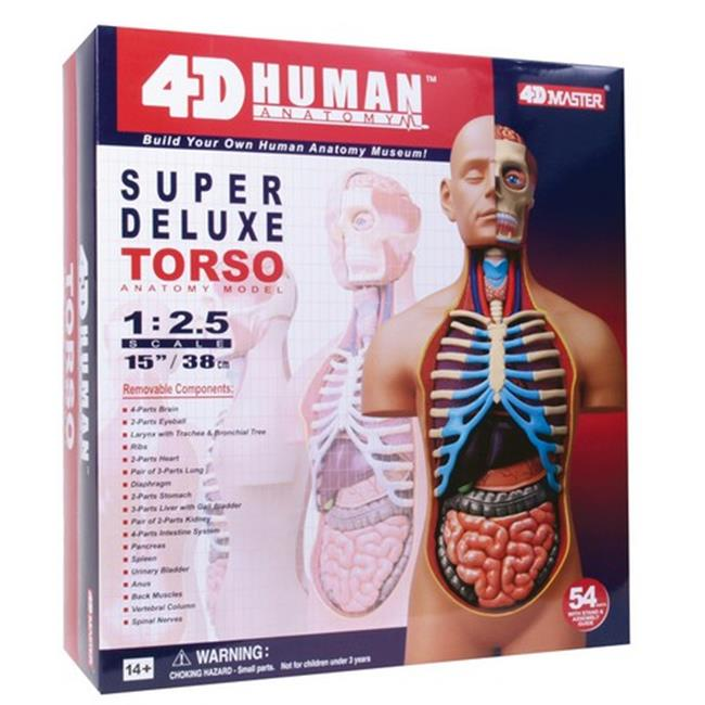 Tedco Toys 26080 4D Human Anatomy Deluxe Torso