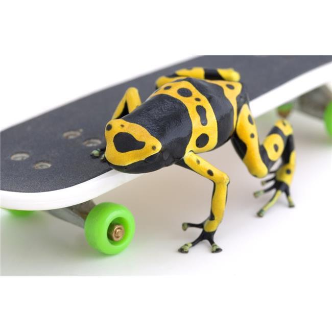 Posterazzi DPI1770323 Frog On A Skateboard Poster Print by Corey Hochachka, 17 x 11 - image 1 de 1