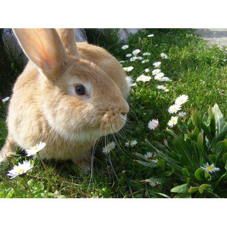 Canvas Print Bunny Animals Rabbit Pets Stretched Canvas 10 x 14](Bunny Print)