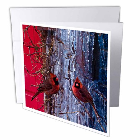 3dRose Ice Red Cardinals Christmas Winter Birds, Greeting Cards, 6 x 6 inches, set of 6 ()
