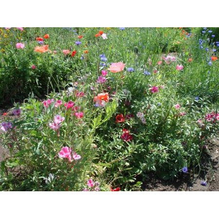 The Dirty Gardener Bee Attractant Flower and Clover Seed Mix, 1 Pounds