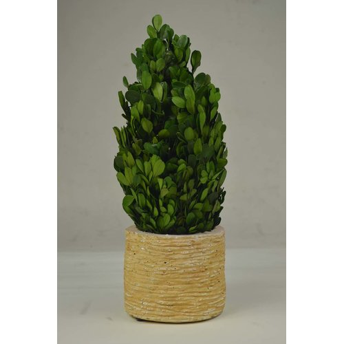 GT DIRECT CORP Tower Boxwood Topiary in Planter