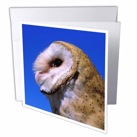3dRose USA, Oregon, Bend. Barn Owls - US38 RER0398 - Ric Ergenbright, Greeting Cards, 6 x 6 inches, set of 12