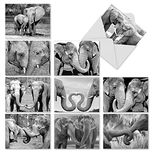 'M2370TYG TRUNKS OF LOVE' 10 Assorted Thank You Greeting Cards Featuring Sweet and Loving Elephant Couples Holding Each Others Trunks with Envelopes by The Best Card Company