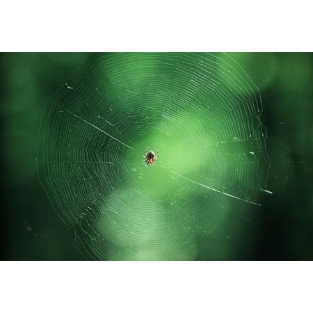 Canvas Print Natural Predator Spider Network Nature Green Web Stretched Canvas 10 x 14](Spider Web Lights)