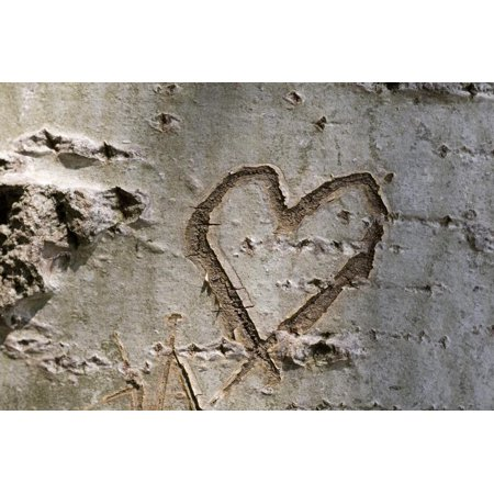 Tree Bark Carving (Carved Heart in Bark of a Tree Print Wall Art By Brigitte)