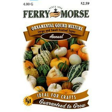 Image of Ferry Morse Ornatmental Gourd Mix