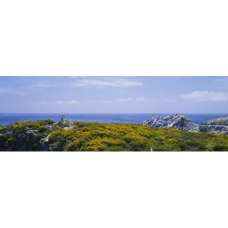 - Sea gulls perching on rocks Point Lobos State Reserve Bird Island California USA Canvas Art - Panoramic Images (18 x 6)
