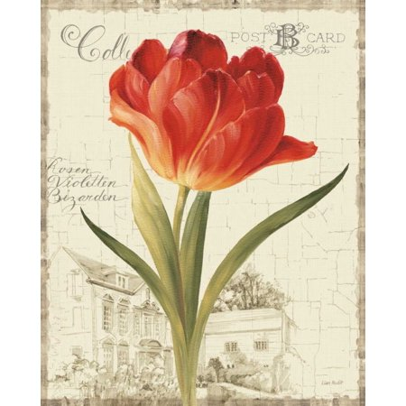 - Garden View III - Red Tulip Poster Print by Lisa Audit