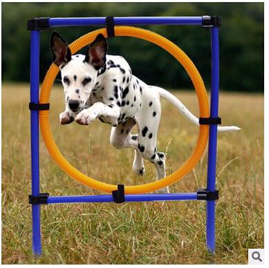 Dog Training Agility
