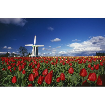Tulip Field And Windmill Canvas Art - Natural Selection Craig Tuttle  Design Pics (18 x (Best Windmill Propeller Design)