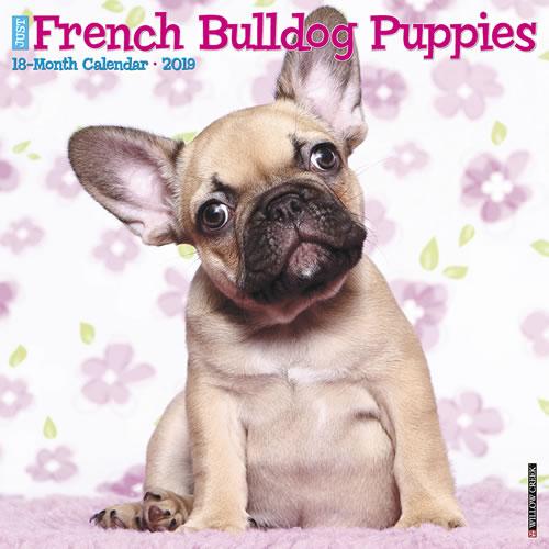 Willow Creek Press 2019 French Bulldog Puppies Wall Calendar