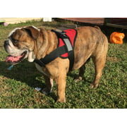 HDP Big Dog Soft No Pull Harness Size:Large Color:Purple