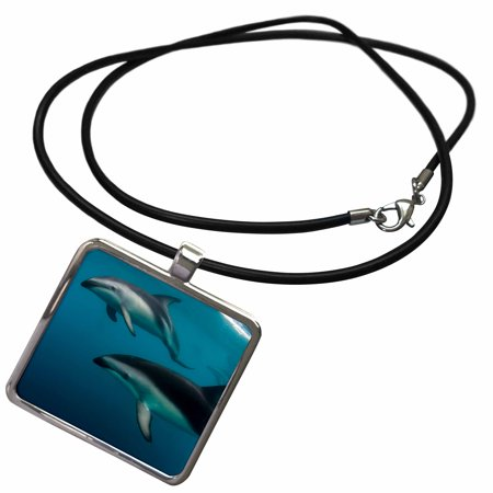 Dusky Dolphin (3dRose Pod of Dusky Dolphins swimming, Kaikoura Peninsula, New Zealand - Necklace with Pendant (ncl_226459_1))