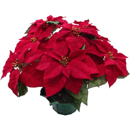 Poinsettia Lace (Holiday Time Red Poinsettia Pot )