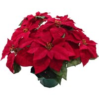 Holiday Time Red Poinsettia Pot