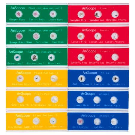 AmScope 36 Color-coded Specimen Zoological and Botanical Slide Set